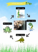 The Life Cycle of a Frog's thumbnail