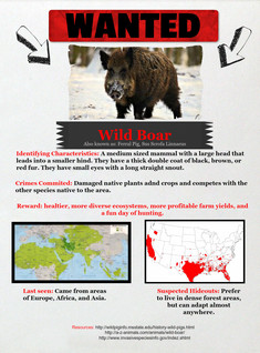 Wild Boar Wanted Poster