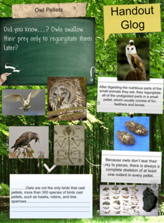 Owls- owl pellets