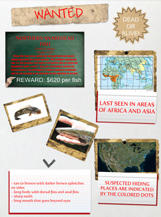 Wanted: Snakehead Fish