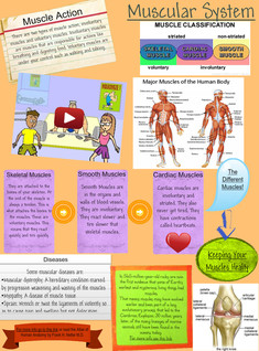 Human body systems- muscles