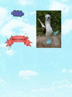 blue footed