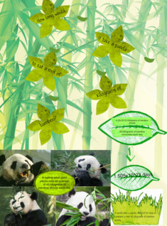 Bamboo Mol project