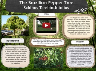 The Brazilian Pepper Tree