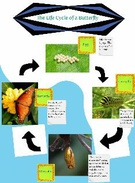 The Life Cycle of a Butterfly's thumbnail
