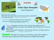 Wanted: Asian Tiger Mosquito's thumbnail