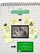falcon watch's thumbnail