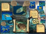 Green Sea Turtles's thumbnail
