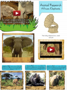 Animal Research Project: African Elephants