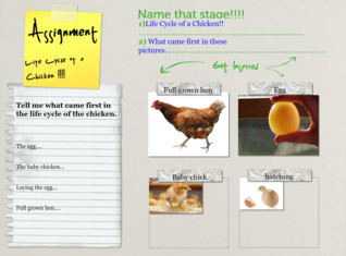 Name That Stage!!! life cycle of a chicken...