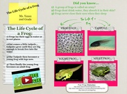 Audrey Yanez-Frog Life Cycle's thumbnail