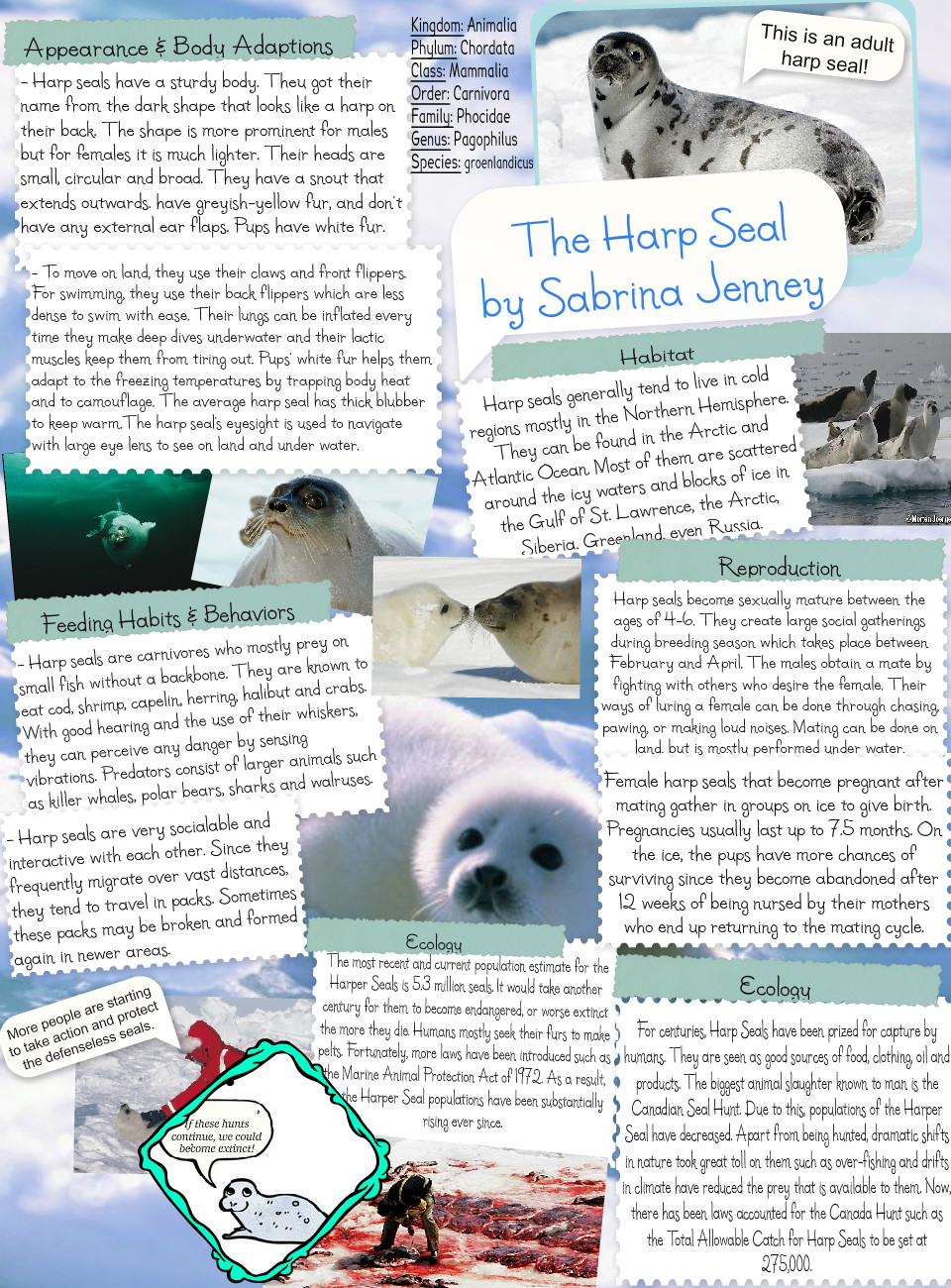 Harp Seal - Project