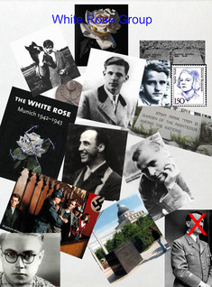 WHITE ROSE PROJECT