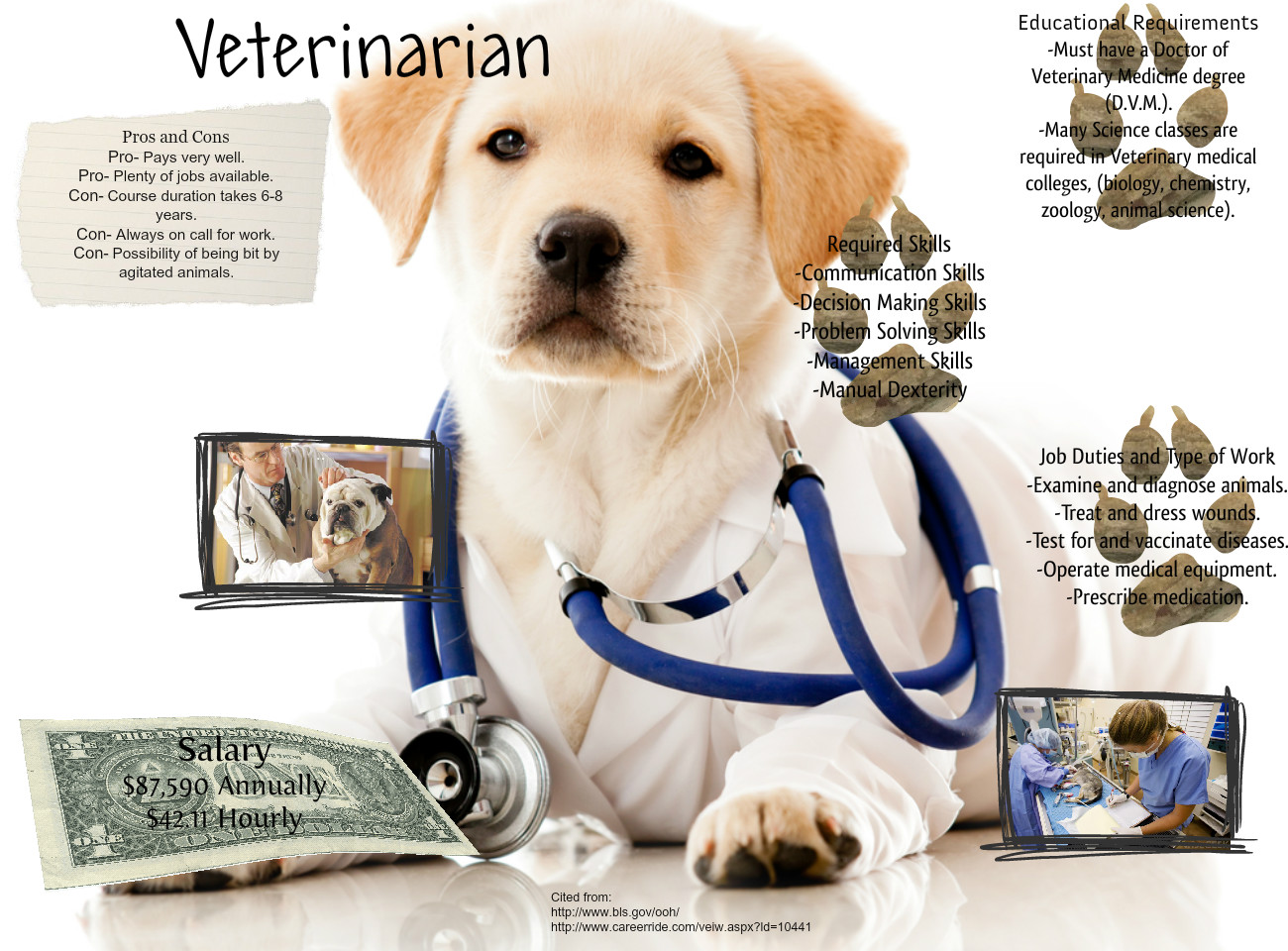 Veterinary Glog: text, images, music, video | Glogster EDU