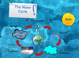 Student Sample- The Water Cycle