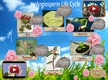 Life Cycle of Angiosperms thumbnail