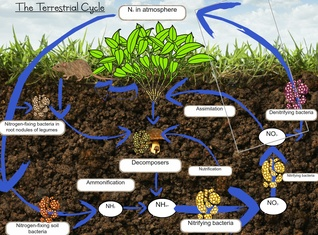 The terrestrial Cycle