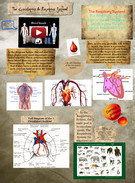 The Circulatory and Respitory System' thumbnail