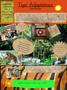 Tiger Adaptations