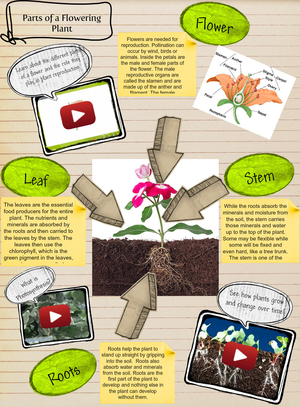 Parts Of A Flowering Plants
