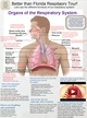 Organs of the Respiratory System thumbnail