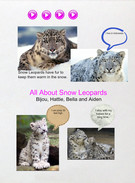 Snow Leopards' thumbnail