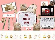All About Cats's thumbnail