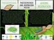 Photosynthesis and Respiration Poster thumbnail