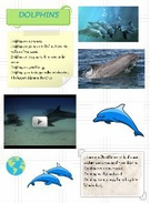 dolphins -a poster's thumbnail