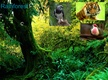 Rainforest animals thumbnail