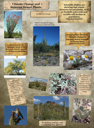 Climate Change and Sonoran Desert Plants's thumbnail