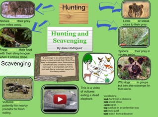 Hunting and Scavenging