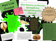 Mad Cow Disease's thumbnail