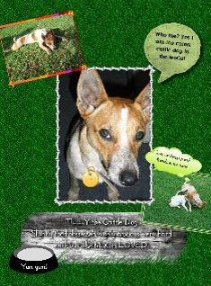 Tilly the Cattle Dog