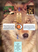 Red wolves's thumbnail