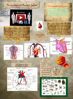 Circulatory an Respitory Systems