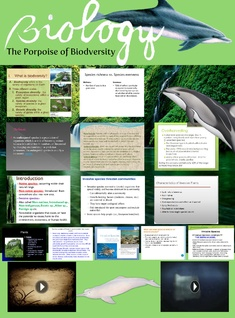 Biology: The Porpoise of Biodversity