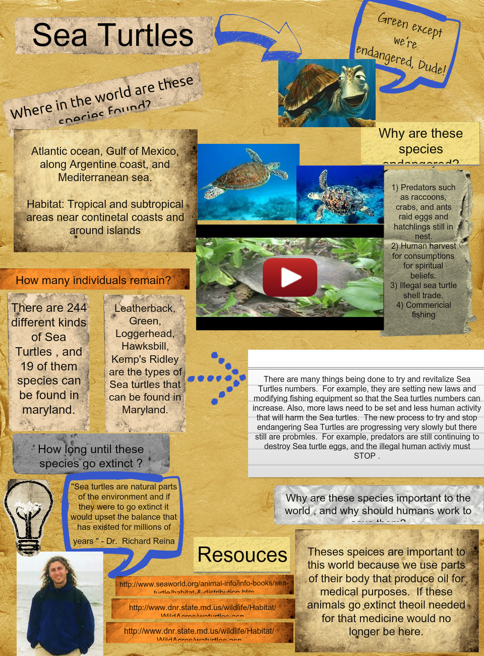 Sea Turtles (Endangered species project GSmith)