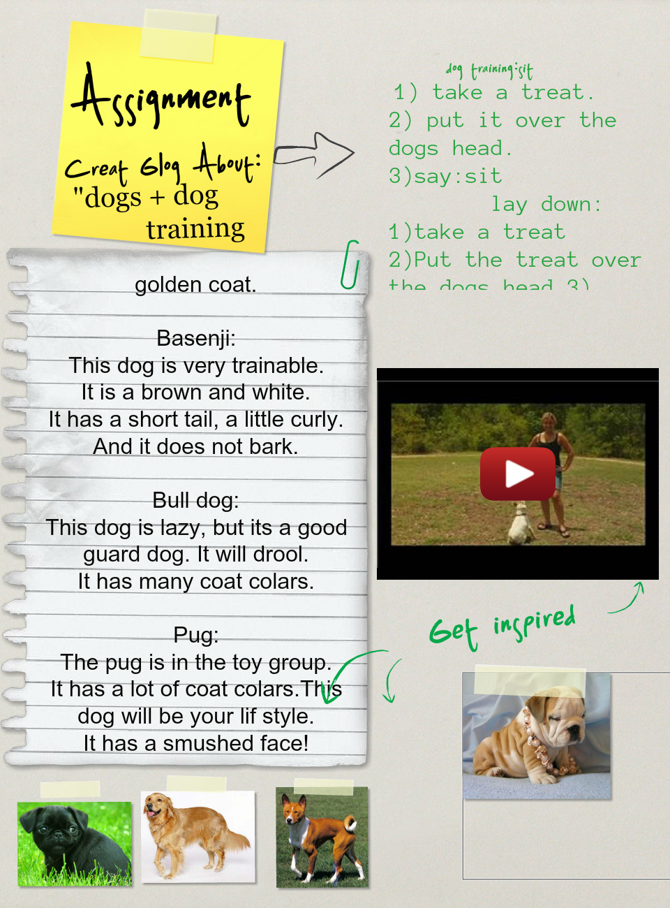 Dogs and dog training (Assignment), Animals